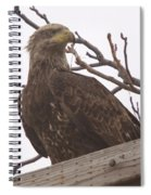 A Young Eagle In The Midst Of Change  Spiral Notebook