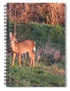 Aah Baby - Deer Spiral Notebook