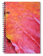 Abstract Dogwood In Autumn Spiral Notebook