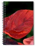 Acalypha Spiral Notebook