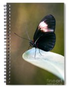 Acrophobia Spiral Notebook