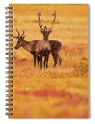 Adult Caribou In The Fall Colours Spiral Notebook