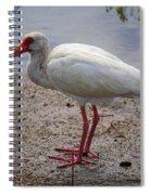 Adult White Ibis Spiral Notebook