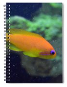 African Anthias Spiral Notebook