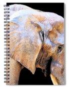 African Babe Spiral Notebook