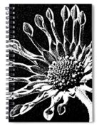 African Daisy In Black And White Spiral Notebook