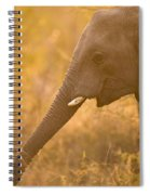 African Elephant Loxodonta Africana Spiral Notebook