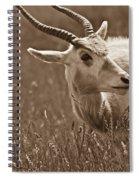 African Grassland Feeder 2 Spiral Notebook