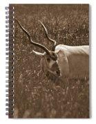 African Grassland Feeder Spiral Notebook
