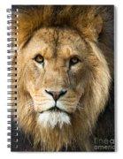 African Lion Spiral Notebook