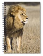 African Lion Panthera Leo Male, Khutse Spiral Notebook