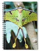 African Moon Moth 1 Spiral Notebook