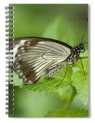 African Papilio Dardanus Butterfly Spiral Notebook