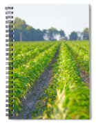 Agriculture- Corn 1 Spiral Notebook