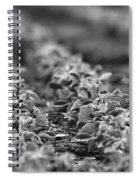 Agriculture- Soybeans 2 Spiral Notebook