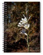 Ajo Lily Spiral Notebook
