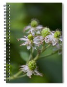 Alabama Wild Blackberries In The Making Spiral Notebook