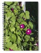 Alabama Wild Pink Morning Glories Spiral Notebook