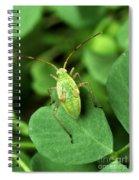 Alfalfa Plant Bug Spiral Notebook
