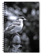Alighten Spiral Notebook