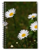 All The Dasies Spiral Notebook