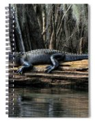 Alligator Sunning Spiral Notebook