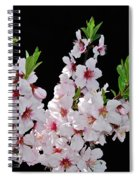 Almond Blossom 0979 Spiral Notebook