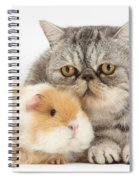 Alpaca Guinea Pig And Silver Tabby Cat Spiral Notebook