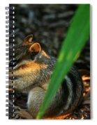 Alvin Spiral Notebook