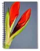 Amarillius Spiral Notebook