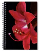 Amaryllis Flower Side View  Spiral Notebook