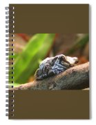 Amazon Milk Frog Spiral Notebook