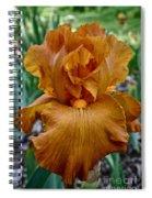 Amber Iris Spiral Notebook