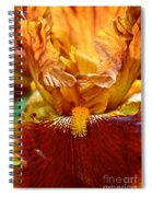 Amber Stripes Spiral Notebook