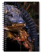American Alligator On A Cypress Tree Spiral Notebook