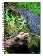 American Alligators Spiral Notebook