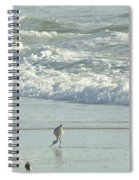 American Avocet In Non-breeding Plumage      Recurvirostra Americana  Spiral Notebook