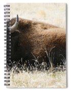 American Bison 2 Spiral Notebook