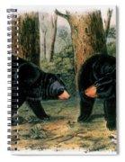 American Black Bear, 1844 Spiral Notebook