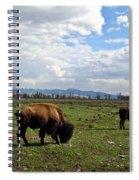 American Buffalo 10 Spiral Notebook