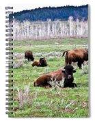 American Buffalo 16 Spiral Notebook