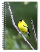 American Goldfinch - Single Male Spiral Notebook