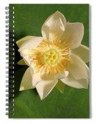 American Lotus Nelumbo Lutea Opening Spiral Notebook