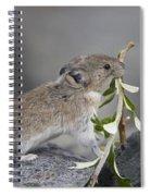 American Pika Ochotona Princeps Spiral Notebook