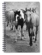 American Quarter Horse Herd In Black And White Spiral Notebook