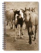 American Quarter Horse Herd In Sepia Spiral Notebook