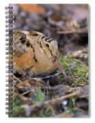 American Woodcock Bird Spiral Notebook