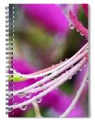 Amherstia Nobilis 3 Spiral Notebook