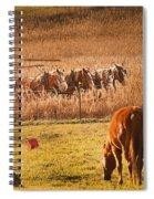 Amish Transportatin All Sizes Spiral Notebook