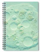 Amoeba Verrucosa Spiral Notebook